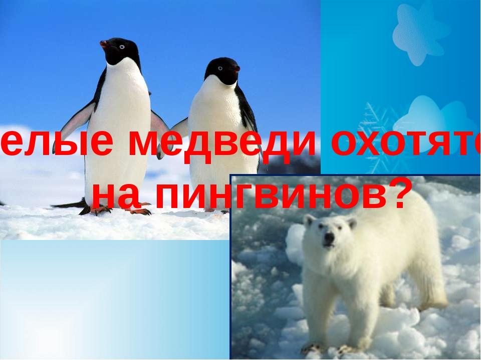 Белые медведи охотятся на пингвинов?