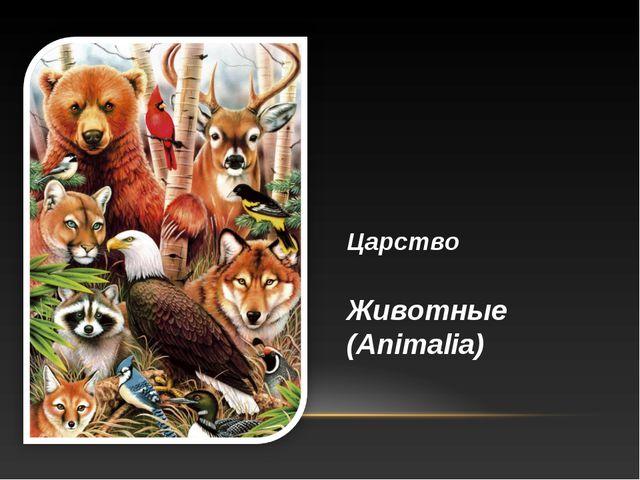Царство Животные (Animalia)