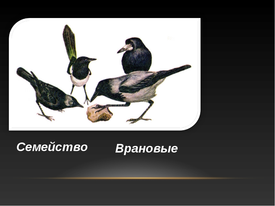 Семейство Врановые