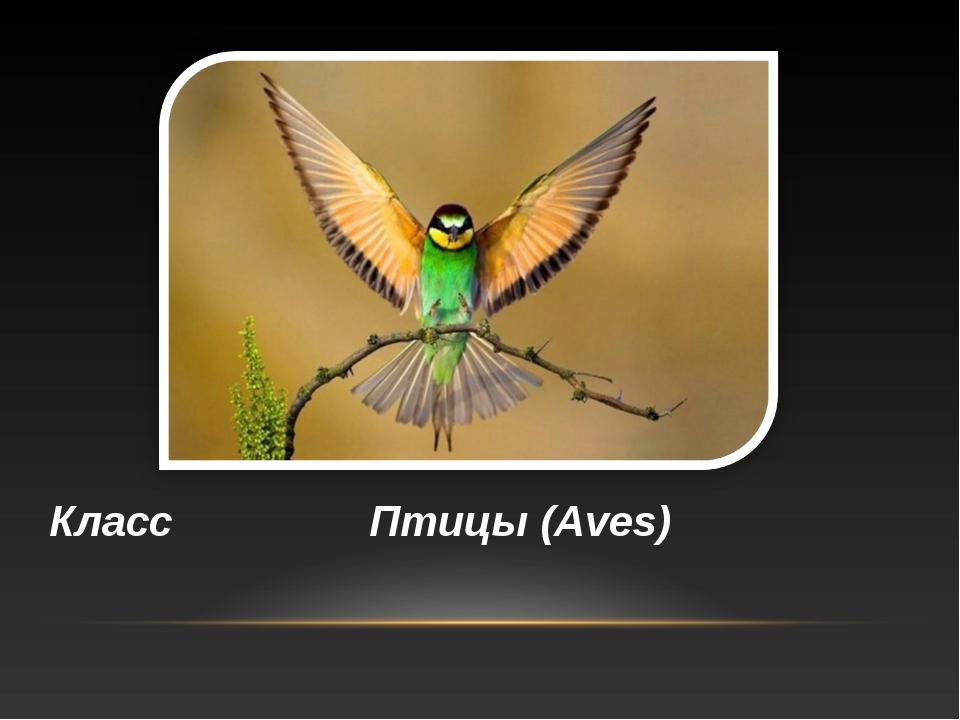 Класс Птицы (Aves)