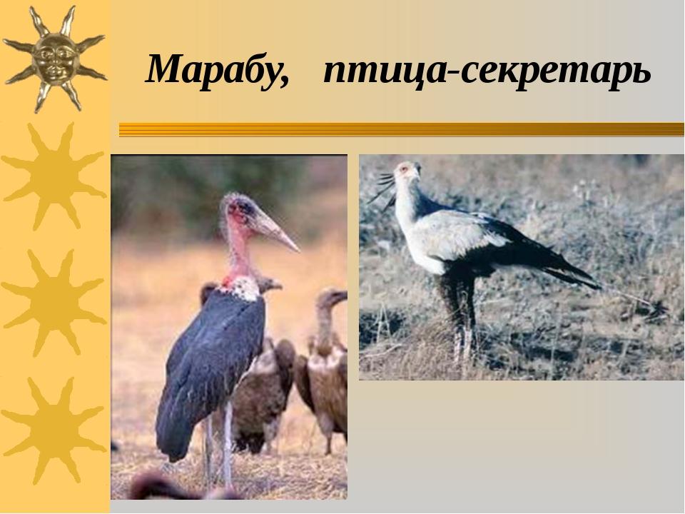 Марабу, птица-секретарь