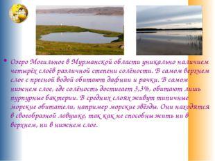 Озеро Могильное в Мурманской области уникально наличием четырёх слоёв различн