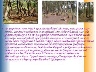 На Куршской косе, что в Калининградской области, есть уникальное место, кото