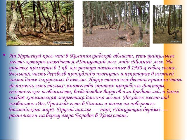 На Куршской косе, что в Калининградской области, есть уникальное место, кото...