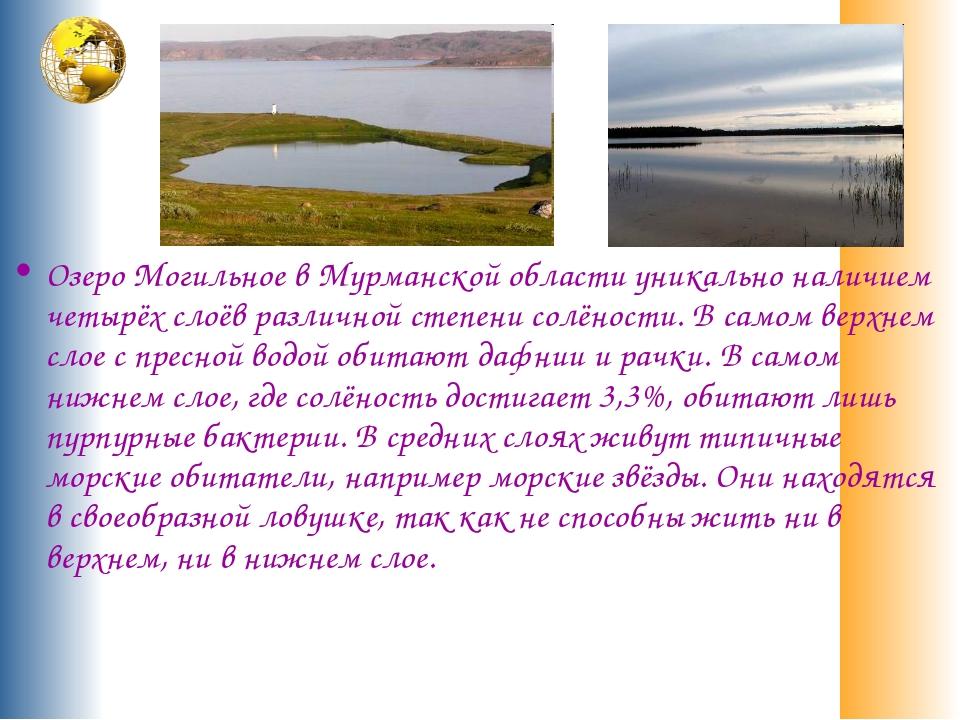 Озеро Могильное в Мурманской области уникально наличием четырёх слоёв различн...