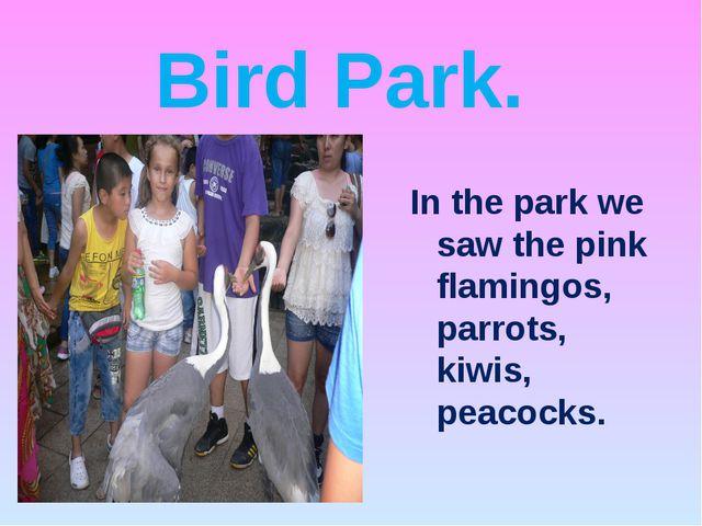 Bird Park. In the park we saw the pink flamingos, parrots, kiwis, peacocks.