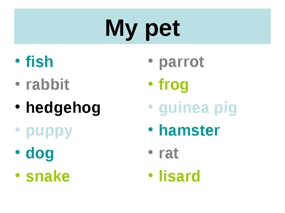 My pet fish rabbit hedgehog puppy dog snake parrot frog guinea pig hamster ra...