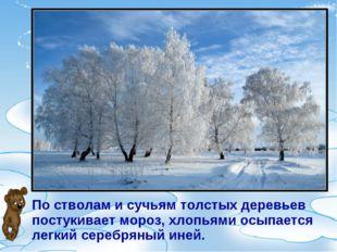 По стволам и сучьям толстых деревьев постукивает мороз, хлопьями осыпается ле
