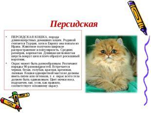 Персидская ПЕРСИДСКАЯ КОШКА, порода длинношерстных домашних кошек. Родиной сч