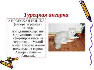 Турецкая ангорка АНГОРСКАЯ КОШКА (ангора турецкая), порода полудлинношерстных