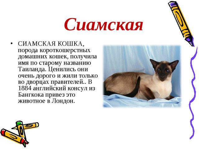 Сиамская СИАМСКАЯ КОШКА, порода короткошерстных домашних кошек, получила имя...
