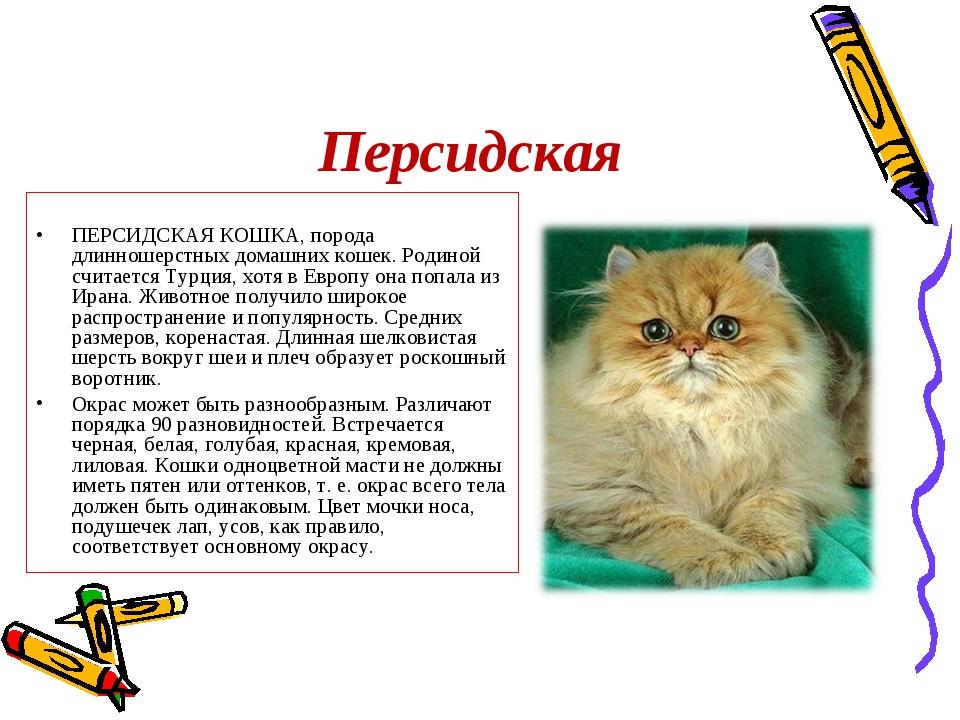 Персидская ПЕРСИДСКАЯ КОШКА, порода длинношерстных домашних кошек. Родиной сч...
