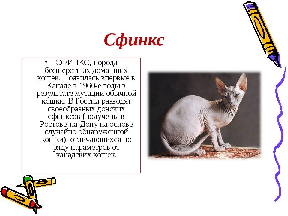 Сфинкс СФИНКС, порода бесшерстных домашних кошек. Появилась впервые в Канаде...