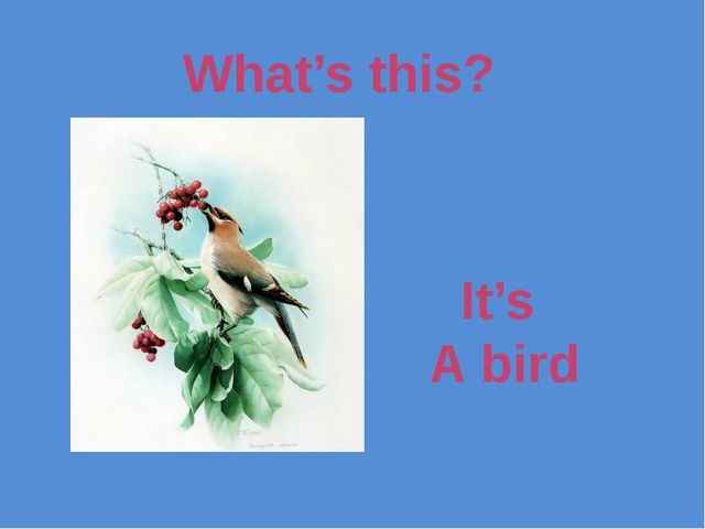 What's this? It's A bird