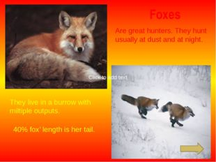 Foxes Are great hunters. They hunt usually at dust and at night. They live in