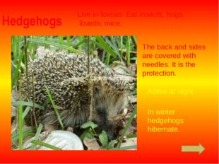 Hedgehogs Live in forests. Eat insects, frogs, lizards, mice. The back and si