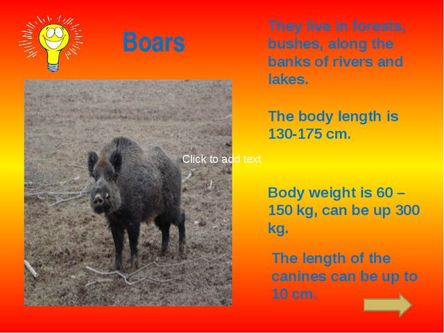 Boars They live in forests, bushes, along the banks of rivers and lakes. The...