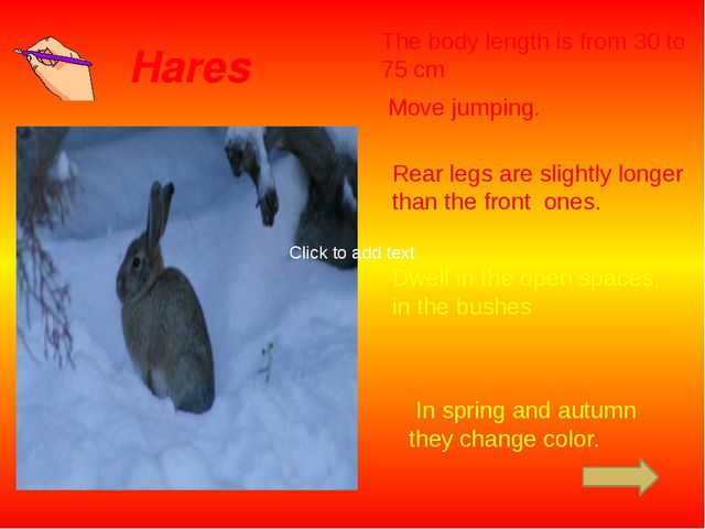Hares The body length is from 30 to 75 сm Move jumping. Rear legs are slightl...