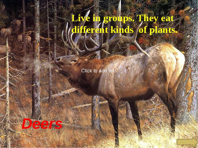 Deers Live in groups. They eat different kinds of plants. Click to add text