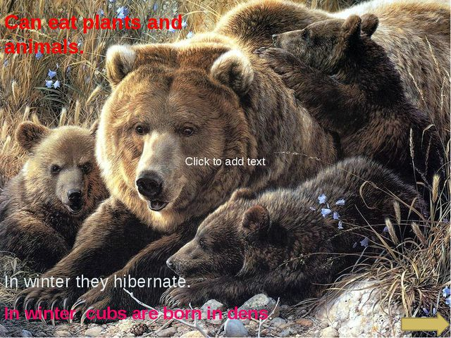 Can eat plants and animals. In winter they hibernate. In winter cubs are bor...