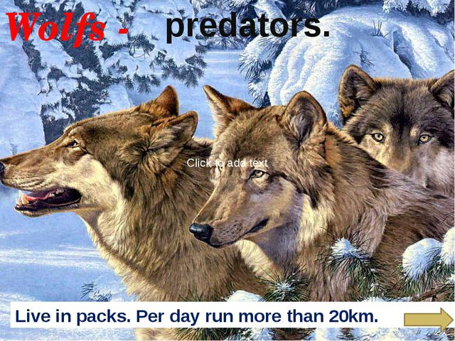 Wolfs - predators. Live in packs. Per day run more than 20km. Click to add t...