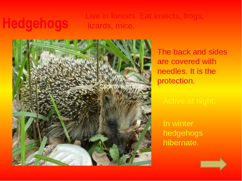 Hedgehogs Live in forests. Eat insects, frogs, lizards, mice. The back and si...