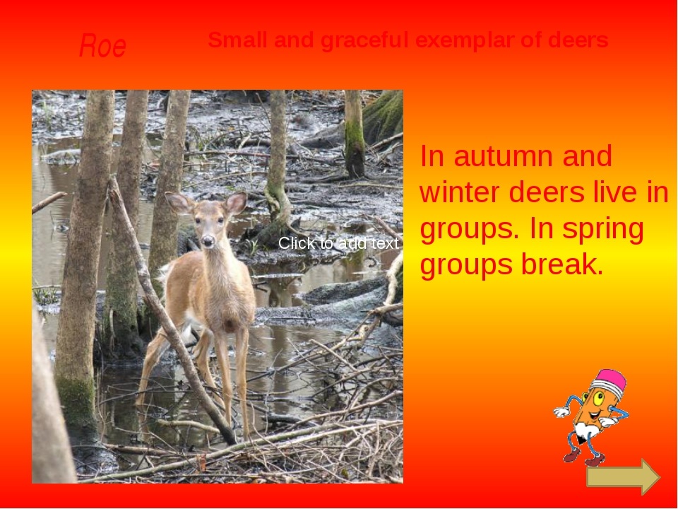 Roe Small and graceful exemplar of deers In autumn and winter deers live in...