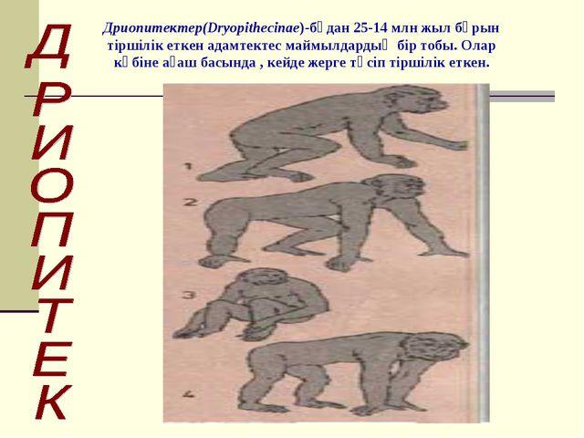Дриопитектер(Dryopithecinae)-бұдан 25-14 млн жыл бұрын тіршілік еткен адамте...
