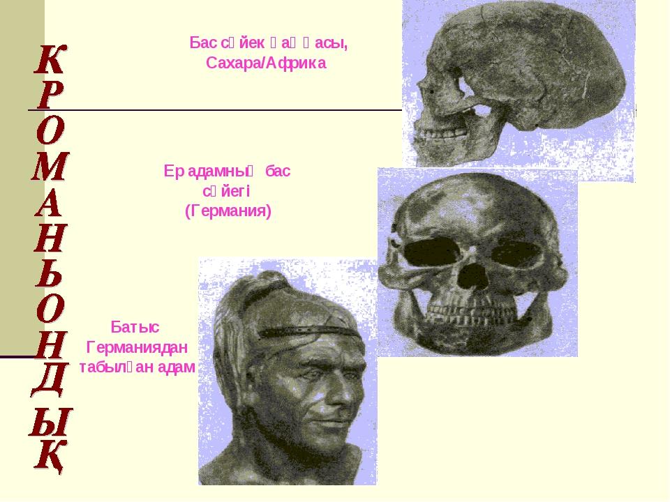 Батыс Германиядан табылған адам Бас сүйек қаңқасы, Сахара/Африка Ер адамның б...