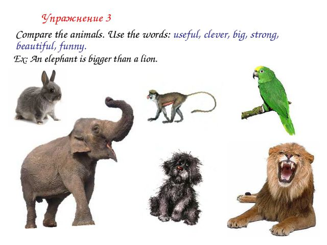 Упражнение 3 	Compare the animals. Use the words: useful, clever, big, strong...