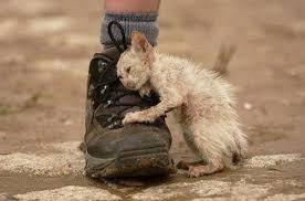 Картинки по запросу день защиты бездомных животных
