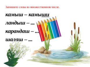 Запишите слова во множественном числе. камыш – камыши ландыш – ... карандаш –