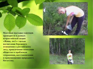 Массовая высадка саженцев проводится в рамках всероссийской акции «Живи, лес!