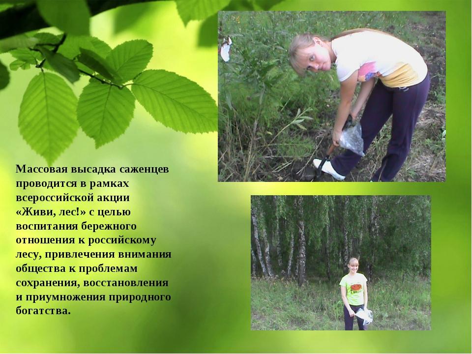 Массовая высадка саженцев проводится в рамках всероссийской акции «Живи, лес!...