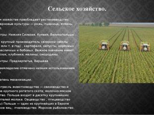 Сельское хозяйство. В сельском хозяйстве преобладает растениеводство. Главные