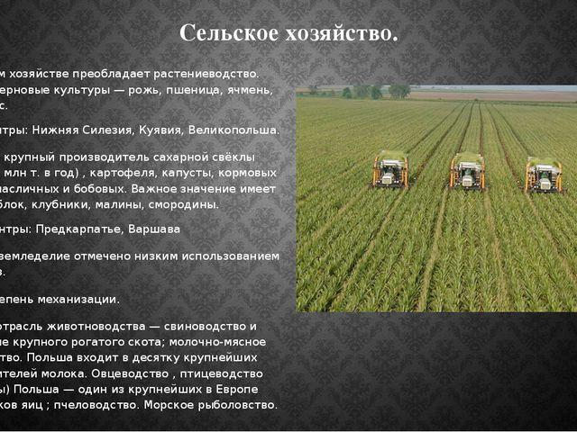 Сельское хозяйство. В сельском хозяйстве преобладает растениеводство. Главные...