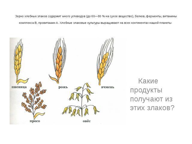 Зерно хлебных злаков содержит много углеводов (до 60—80 % на сухое вещество)...