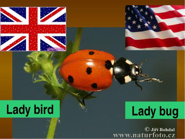 Lady bird Lady bug