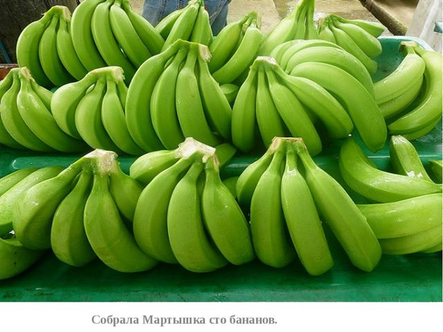 Собрала Мартышка сто бананов.