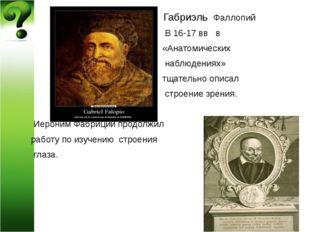 Габриэль Фаллопий В 16-17 вв в «Анатомических наблюдениях» тщательно описал