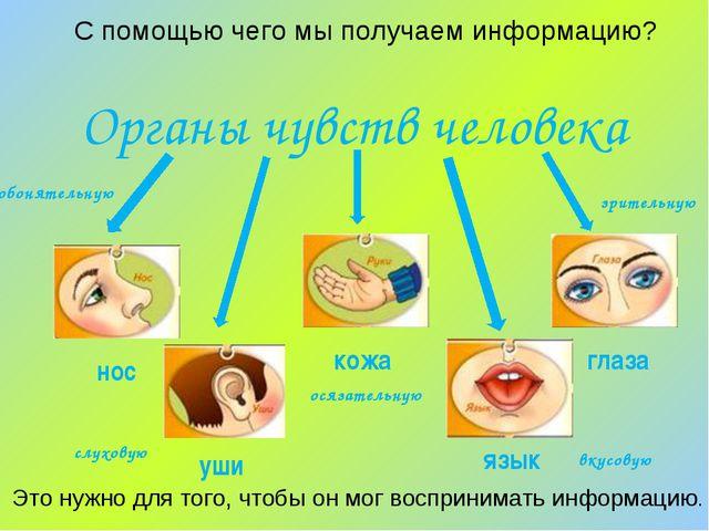 С помощью чего мы получаем информацию? Органы чувств человека Это нужно для т...