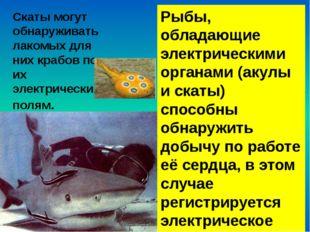 Некоторые рыбы, пытаясь спастись, зарываются в песок и замирают там. Но и у н