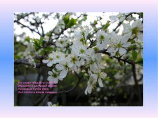 Вот слово «радость» у меня Отражено в цветущей вишне, И розовым лучом маня, О