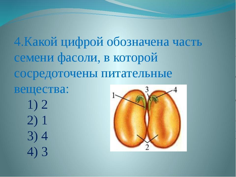 4.Какой цифрой обозначена часть семени фасоли, в которой сосредоточены питат...
