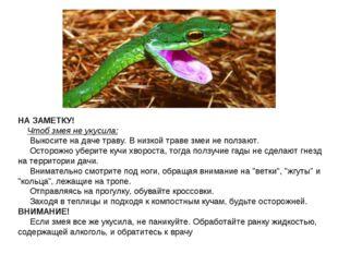 НА ЗАМЕТКУ!  Чтоб змея не укусила:  Выкосите на даче траву. В низкой т