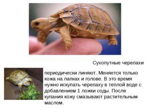 Сухопутные черепахи периодически линяю