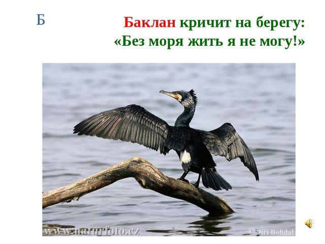 Баклан кричит на берегу: «Без моря жить я не могу!» Б
