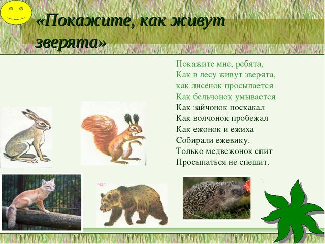 «Покажите, как живут зверята» Покажите мне, ребята, Как в лесу живут зверята,...