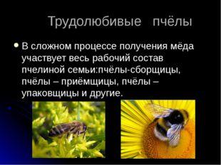 Трудолюбивые пчёлы В сложном процессе получения мёда участвует весь рабочий
