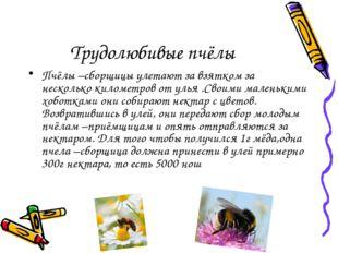Трудолюбивые пчёлы Пчёлы –сборщицы улетают за взятком за несколько километров